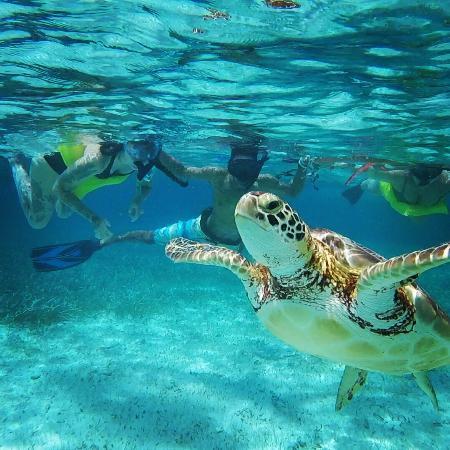 Searious Adventures