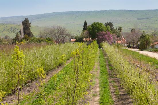 Galilee, Israel: Surrounded by an orchard