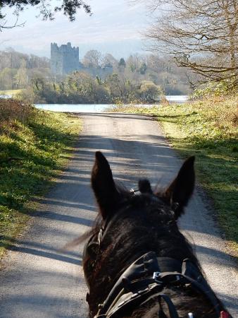 Holiday Inn Killarney: Horse and Cart ride through the national park.