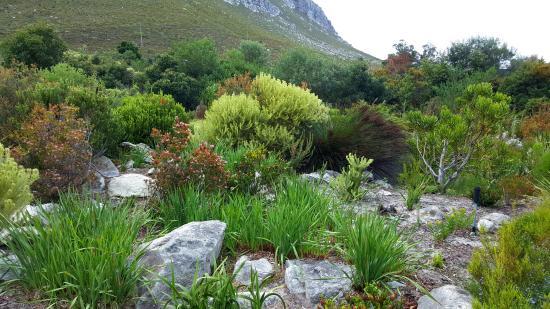 Betty's Bay, Republika Południowej Afryki: Gardens