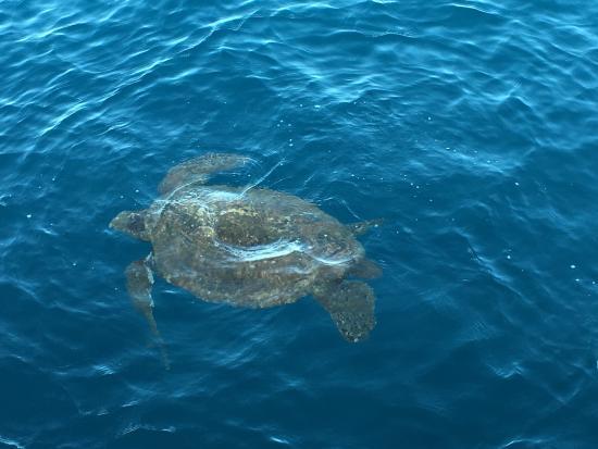 Eleele, Hawái: Kauai Sea Tours