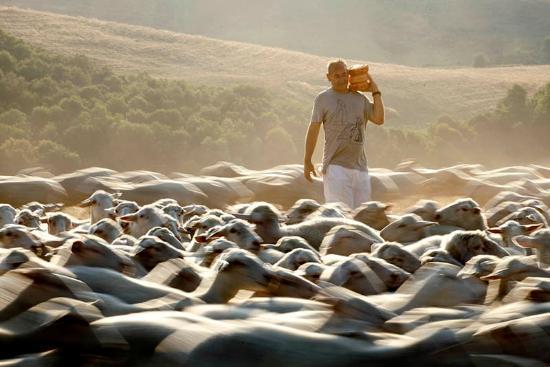 Fattoria Lischeto: Giovanni e le sue pecore