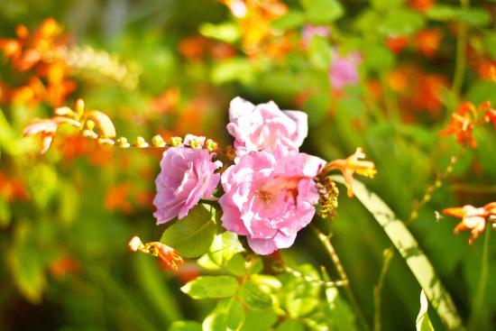 Durbanville, África do Sul: flower in garden