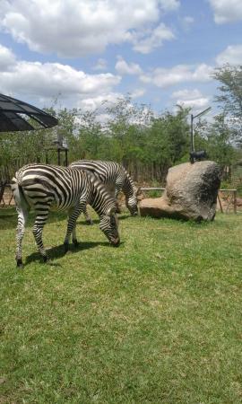 Kariba, Zimbabwe: Lunchtime visitors