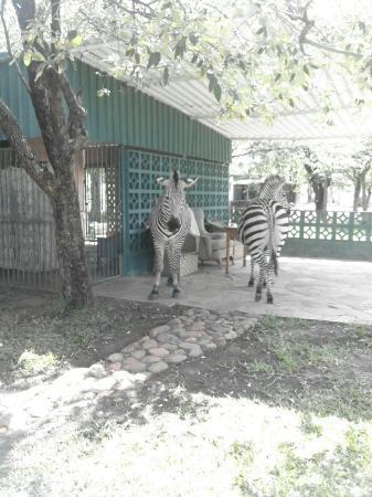 Kariba, Zimbabwe: Non-paying guests