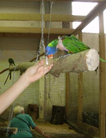 Utropia: кормим попугайчика