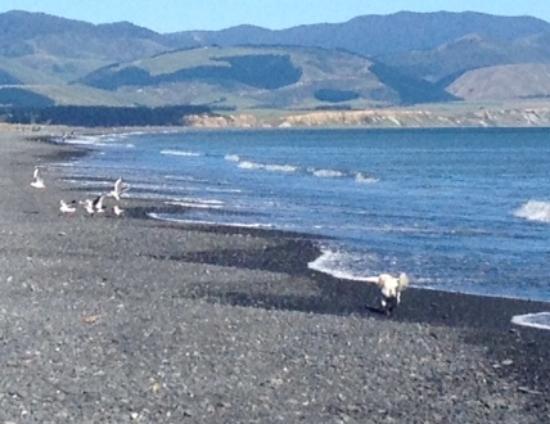 Featherston, Nueva Zelanda: Ocean Beach