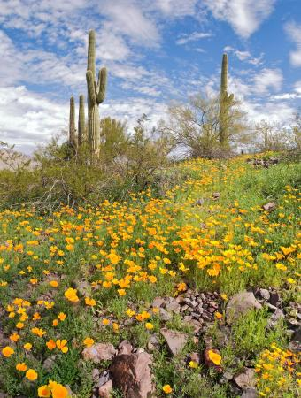 Doubletree by Hilton Tucson - Reid Park: Sonoran Desert