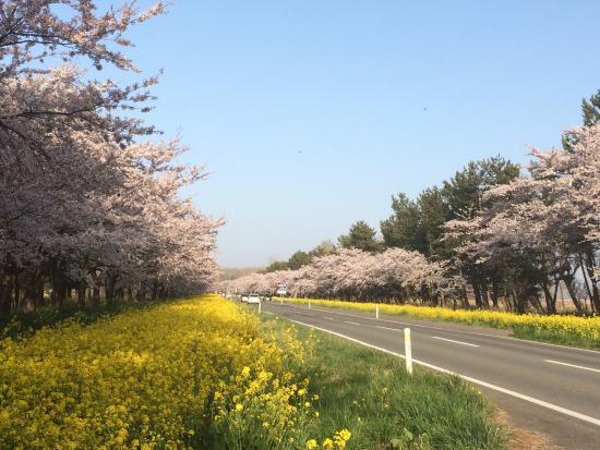 Nanohana Road