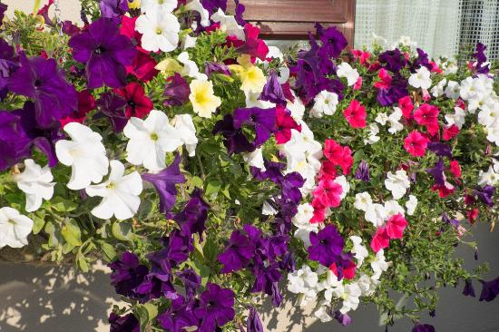 Flesk Lodge : Summer Flowers