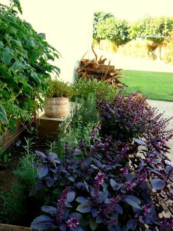 Simmer Down Guest Lodge: The kitchen garden