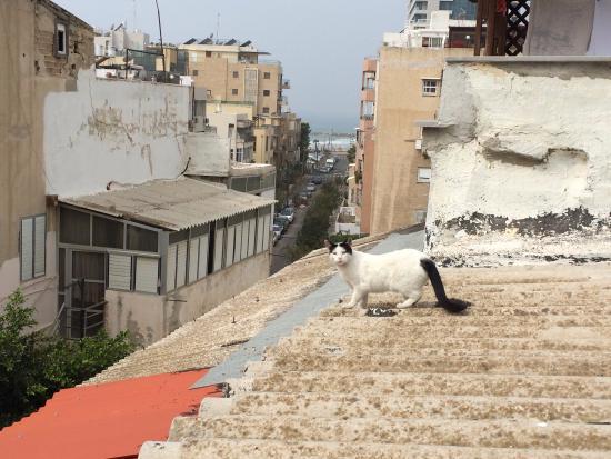 Peer Boutique Hotel Tel Aviv Israel Reviews Photos