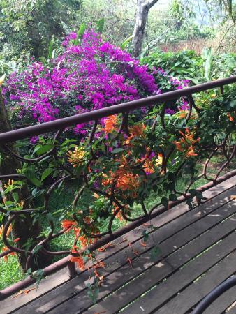 Tacacori EcoLodge: Garden