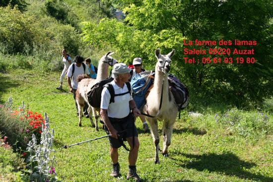 Capoulet-et-Junac, France: La ferme aux lamas