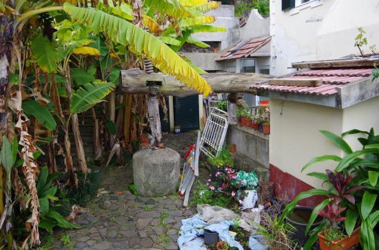 Arco de Sao Jorge, Portugal: Bananenbäume und Müll