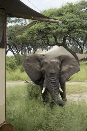 Parque Nacional de Hwange, Zimbabue: Close Encounters at Somalisa Camp