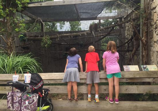 The sunset zoo is best thing in Manhattan and one of the best zoo experiences we've had anywhere