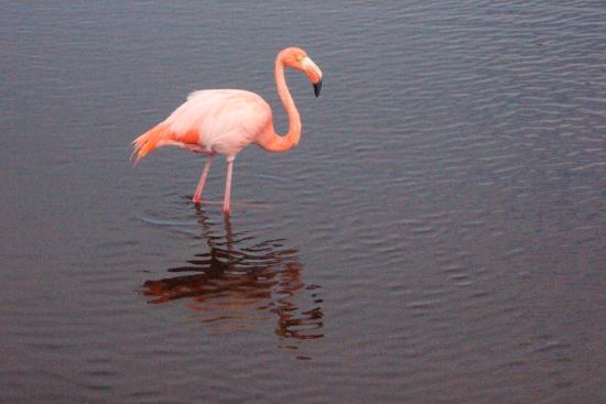 Puerto Villamil, Ecuador: Spieglein, Spieglein ...