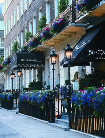 Photo of The Montague on The Gardens London