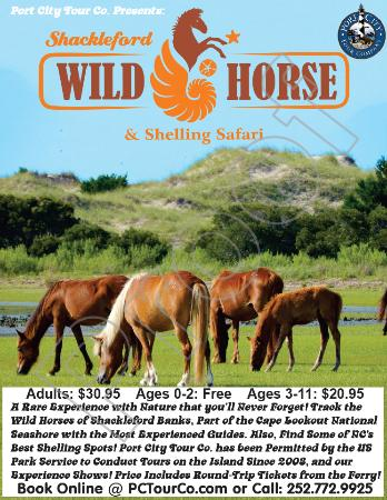Shackleford Wild Horse & Shelling Safari: Poster Proof