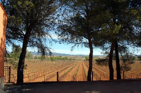 Vinedos y Bodegas Vegalfaro