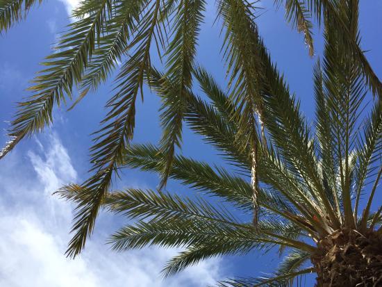 Riad des Golfs : photo1.jpg