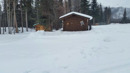 Tok, AK: Log Cabin Wilderness Lodge