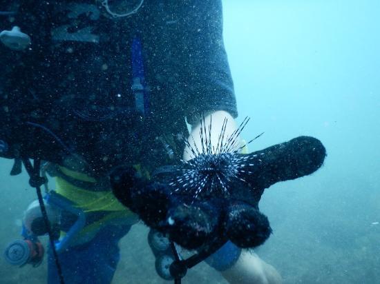 Πλάγια Σαμάρα, Κόστα Ρίκα: I had an incredible experience with Freedom Diving! Milton was a great host and an excellent cap