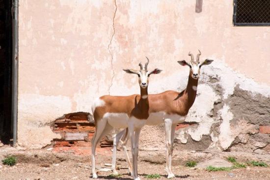 Parque de Rescate de la Fauna Sahariana