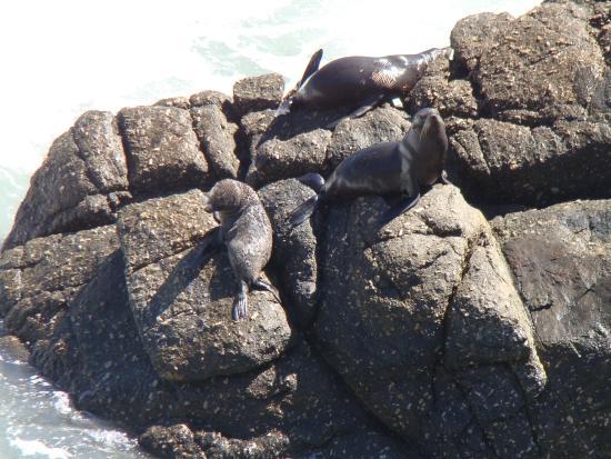 Westport, Νέα Ζηλανδία: Seals sunning themselves