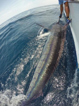 Πλάγια Σαμάρα, Κόστα Ρίκα: Monster marlin