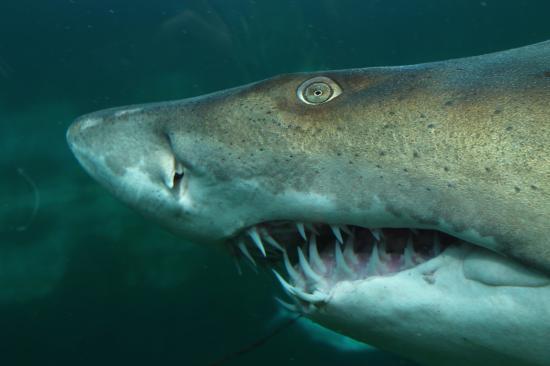 Pittsburgh Zoo & PPG Aquarium: sharks