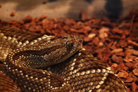 Pittsburgh Zoo & PPG Aquarium: reptiles