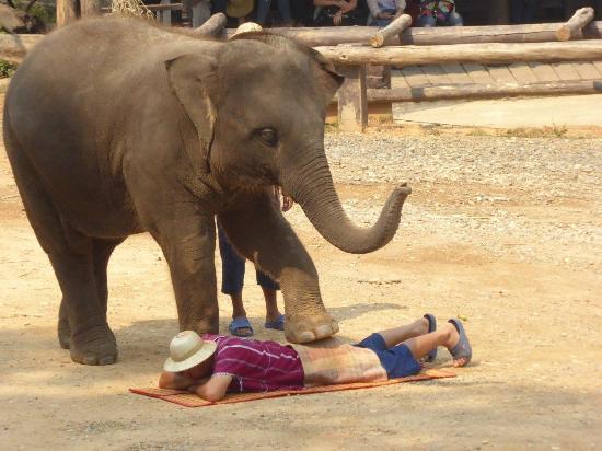 馬沙大象營