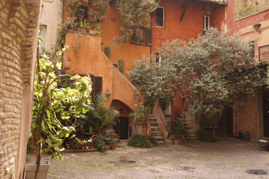 Кошка - само очарование! - Picture of Arco degli Acetari ...