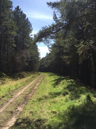 Broxa Forest