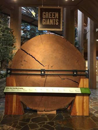 World Forestry Center: photo7.jpg