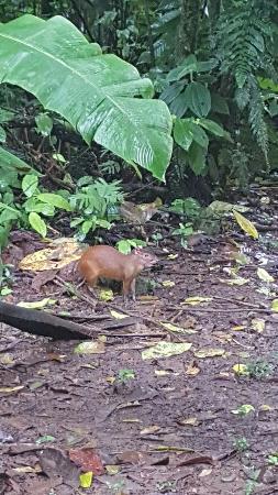 Tirimbina Biological Reserve照片