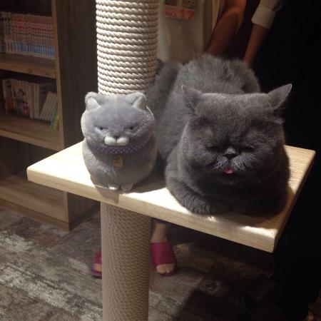 ‪Cat Cafe Calico Kichijoji‬