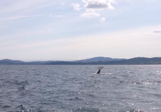 Sidney Whale Watching: photo0.jpg