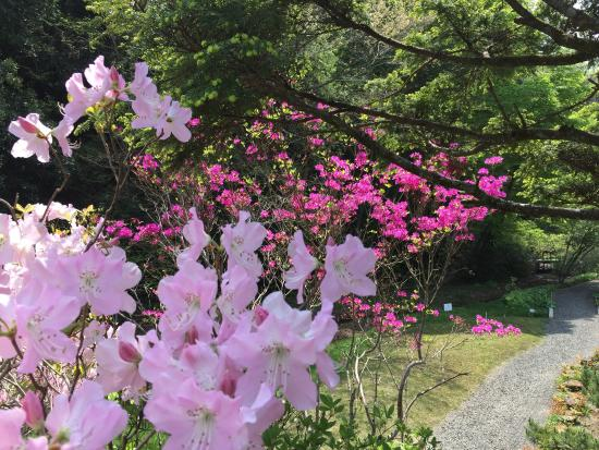 Botanical Garden of Tohoku University