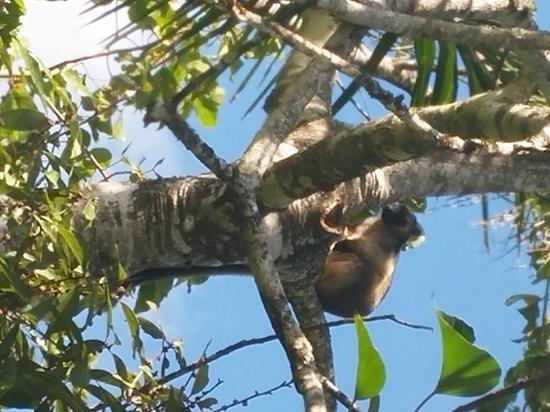 Tree Kangaroo Nerada Tea - Picture of Nerada Tea ...