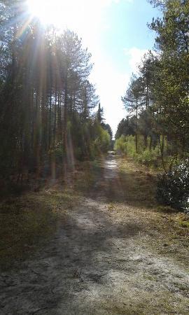 Beautiful walks in Ringwood Forest