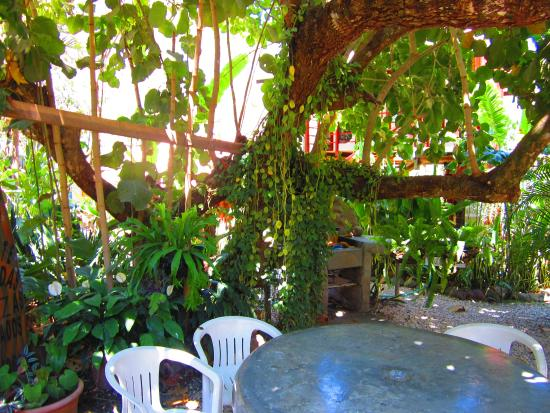 A hidden oasis at Cafe Coyote