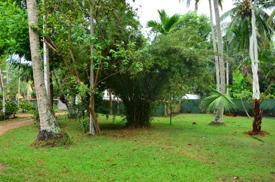 Talpe, Sri Lanka: GARDEN