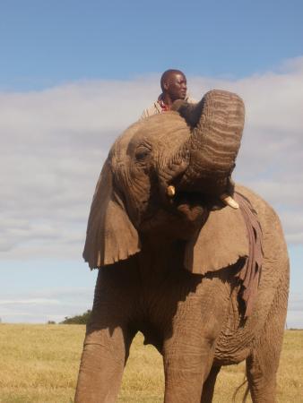 Kwantu Elephant Sanctuary: Elephants