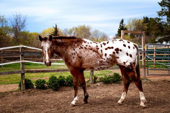 Healing With Horses at Wildrose Horse Farm