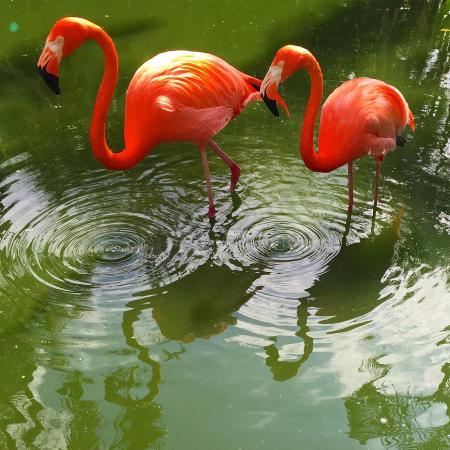 Davie, FL: Flamingo Gardens