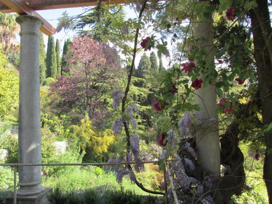 David austin roses wolverhampton giardino di rose con rosa henri