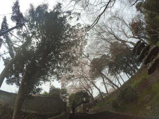 Shiogama, Japonia: Road to the shrine
